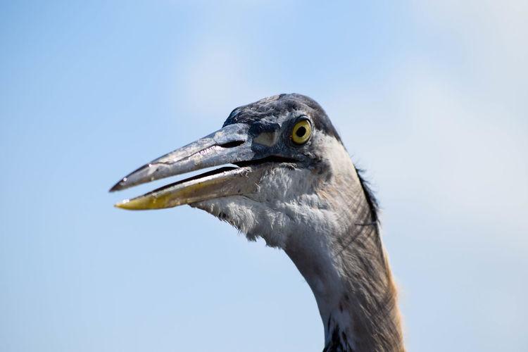 Close-up of bird against sky