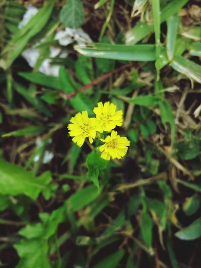What Does Peace Look Like To You? Flores EyeEm Nature Lover