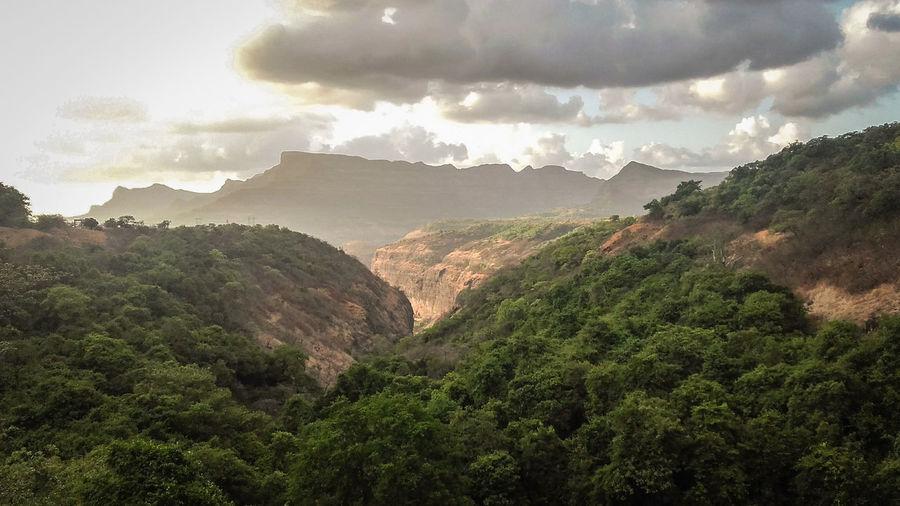 Tamhini forest