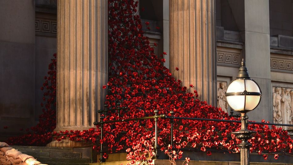 Christmas Time Liverpool Liverpool, England Poppies  Museum Memory 2015  Weeping Window Weeping Poppies