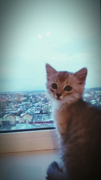 Hello World Sky Cat♡ Cat мойкотик✌ луна Luna Cute :) Mycat Buildings