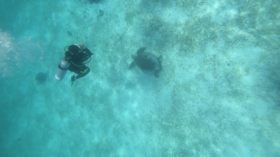 Diving with