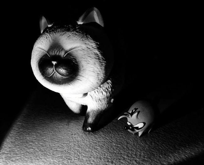 BK cat Pets