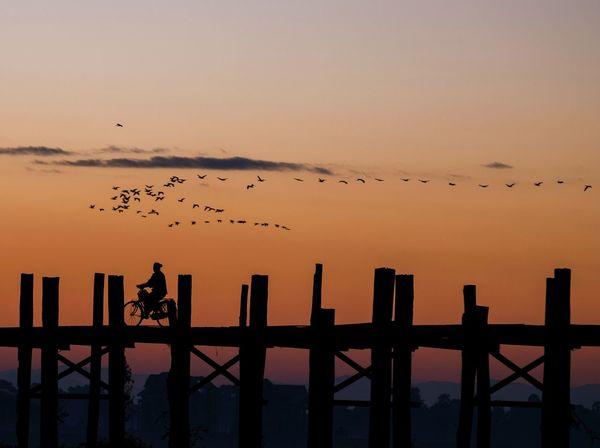 Golden Hour Goldenhour Ubeinbridge Mandalay Myanmar Sunrise Sunset Silhouette Bird Railing Flock Of Birds Animal Themes First Eyeem Photo