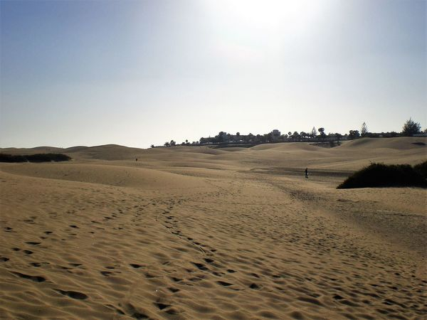 Arid Climate Beach Beauty In Nature Blue Day Desert Horizon Over Land Idyllic Landscape Nature Non-urban Scene Outdoors Remote Sand Scenics Shore Sky Tourism Tranquil Scene Tranquility Travel Destinations Gran Canaria Dunes Dunes De Maspalomas Lost In The Landscape