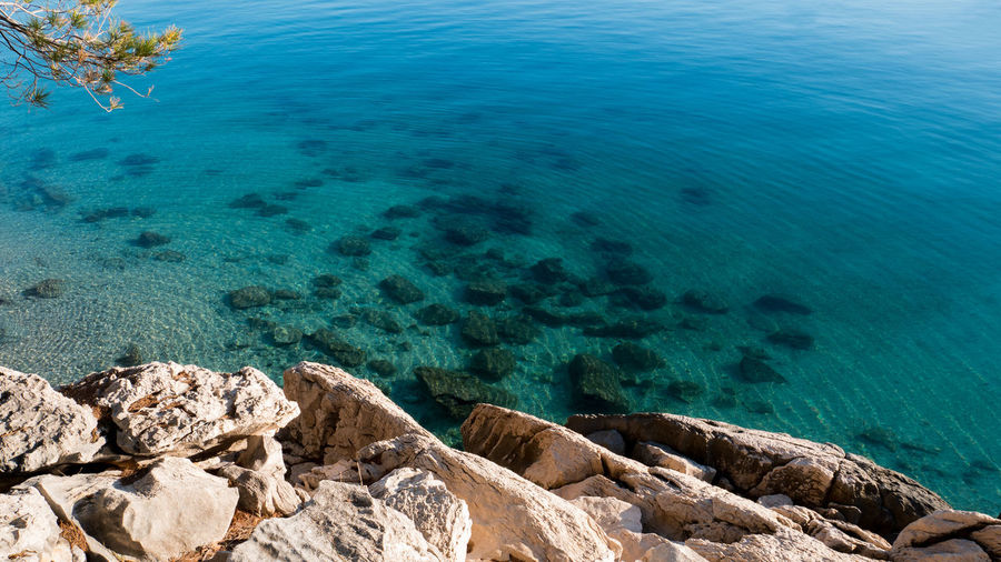 Rocky coastline with pine tree and crystal clear sea Adriatic Beauty In Nature Calm Clear Coast Coastline Croatia Day High Angle View Mediterranean  Nature Nature No People Outdoors Scenic Scenics Sea Sea Life Shore Summer Sunlight Tranquility Transparent Travel Water
