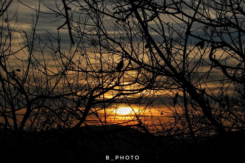Sunset Silhouette Tree Bare Tree Branch Beauty In Nature Nature Scenics Tranquility Sky Outdoors No People Day