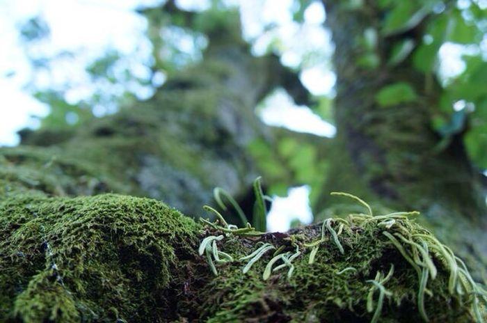 最近苔にハマり中♡苔の森行きたい♡ Moss Tree Green 2012