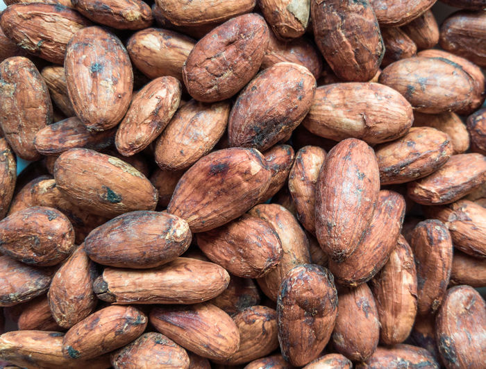 Cacao beans close up