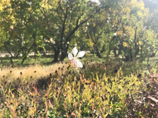 Autumn Flower Growth Nature Fragility Petal Flower Head Beauty In Nature Plant Freshness Blooming Field Focus On Foreground Day No People Outdoors Tree Close-up Autumn Beauty In Nature Nature