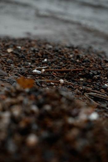 Selective Focus No People Nature Close-up Day Land Beach Outdoors Textured  Surface Level Brown Plant Part Tranquility Street Backgrounds Pattern Leaf Dirt Wood - Material Shore