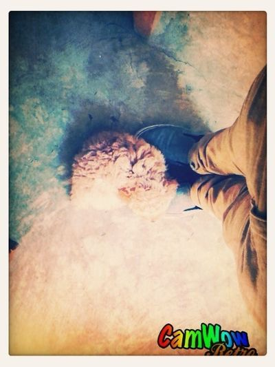 Sleeping In My Feet
