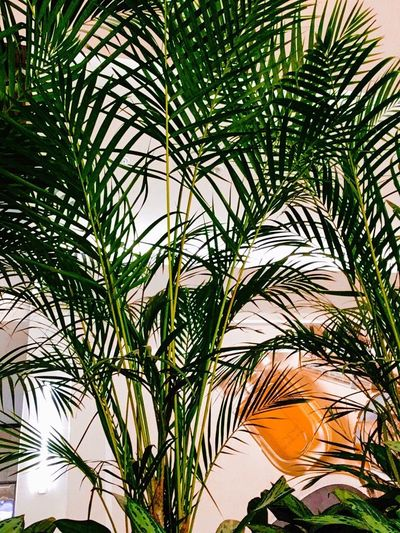 Pure boredom Plant Growth Day No People Nature Palm Tree Outdoors Close-up