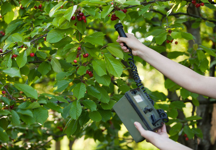 Cropped hand using geiger counter on cherry tree