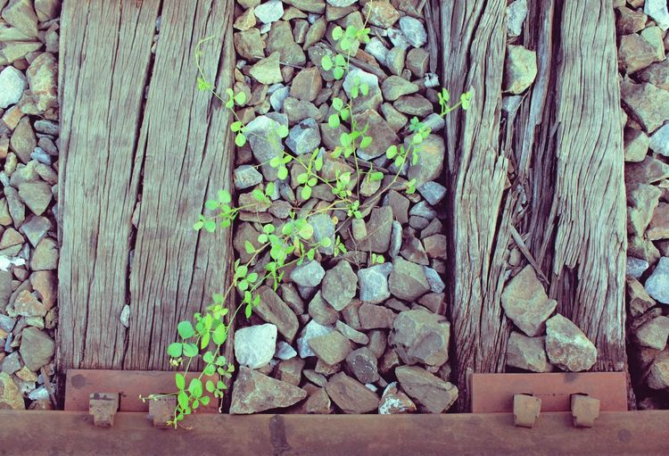 Old railway with green plant vintage filter Railway Railroad Transportation Transport Old Previous Vintage Travel Way Past Track