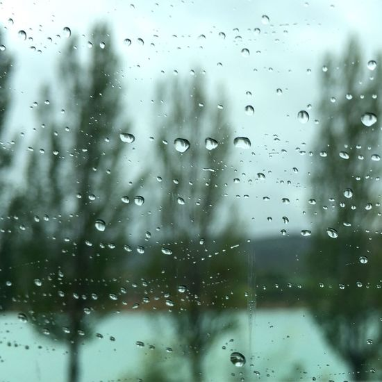 Taking Photos Rainy Days Raindrops Trees View From The Car Window Lakeside Quietness Sadness Window View Rain