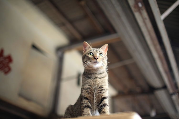 Hong Kong City Standing Animal Themes Cat China Domestic Animals Domestic Cat Feline Looking At Camera Mammal No People One Animal Pets Portrait Small Cat Store Stray Cat Streetphotography Tabby Cat Wild Cat