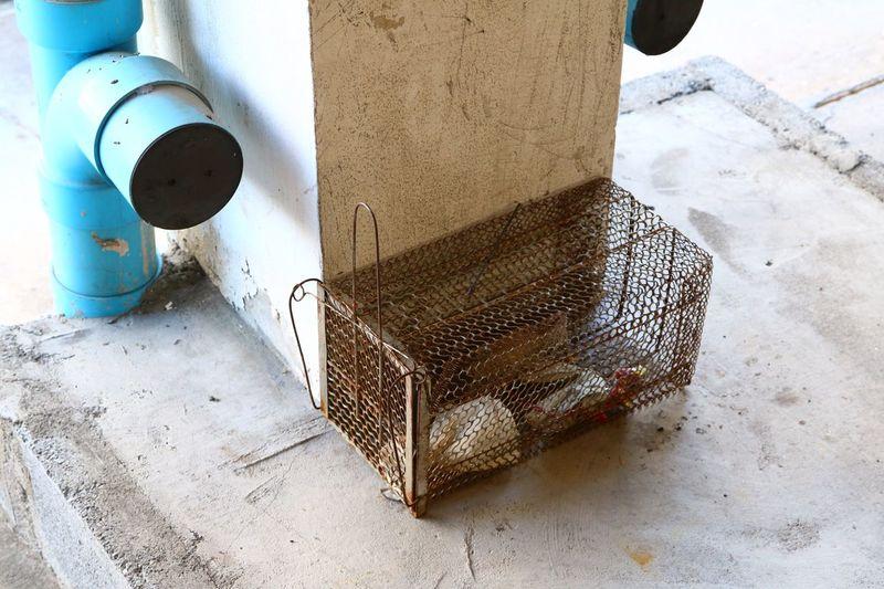 Mesh Mule Matel Rat Rat Trap Cage Mousetrap Instruments