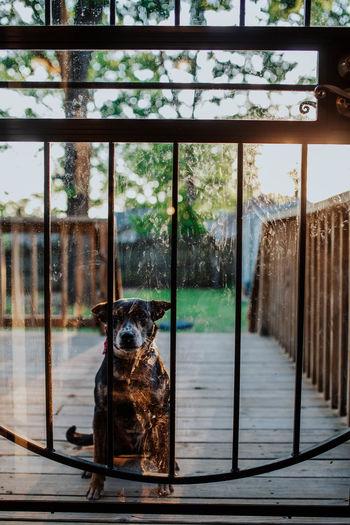 Portrait of dog sitting by window