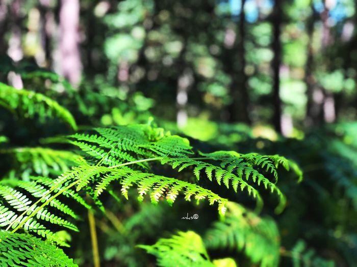 Active Nature Landscape Bestoftheday EyeEm Best Shots Photography Travel Destinations Growth Green Color Plant Part Leaf Plant Nature Tree Close-up Forest Sunlight