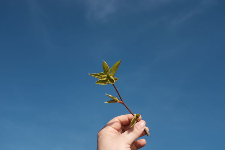 Cropped hand of twig against blue sky