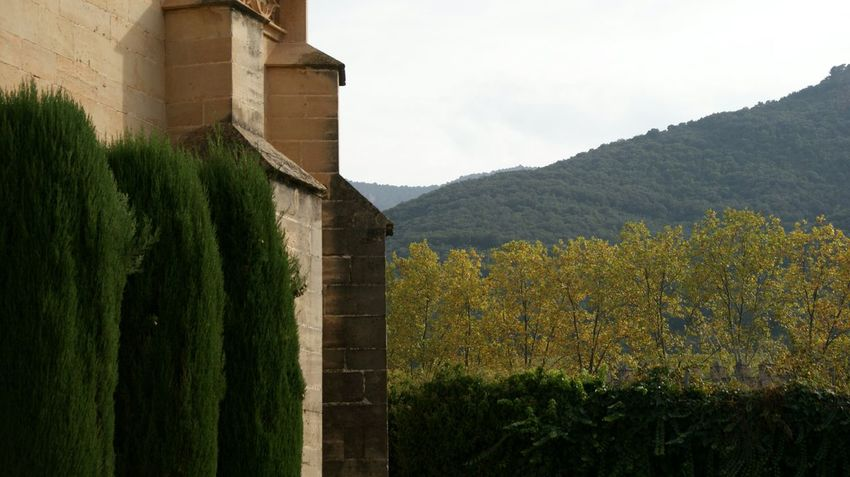 Green at Poblet Monastery Green Color Nature Architecture Outdoors No People Sony A350 SONY Alpha350 Textures And Surfaces Mountain View Forest Mountains Beauty In Nature Scenics Mountain Nature Tranquility Tree Wall Medieval Stone Wall Stone