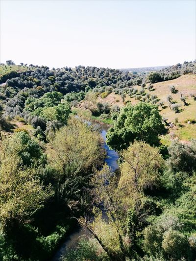 Riverland Nature Tree Day No People Scenics Outdoors Landscape Beauty In Nature Sky Growth Forrest Nature Landscape_Collection Trees And Sky Trees And Nature Trees Yellow Green Nature Clear Sky Tree River Rednecklife