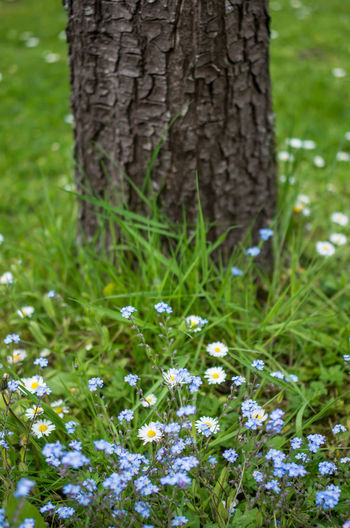 Spring flowers Tree Beauty In Nature Close-up Day Field Flower Flowering Plant Flowers Focus On Foreground Fragility Freshness Grass Growth Land Nature No People Outdoors Plant Spring Spring Flowers Springtime Tree Tree Trunk Trunk Vulnerability
