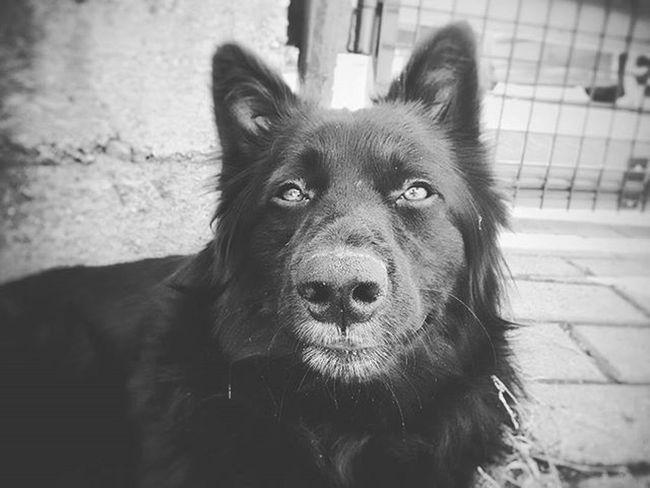 hey dog! Dog Pet Garden House Koni Mik Pereces Phone_o_grapher Phone_o_graphy Phone Nosquares