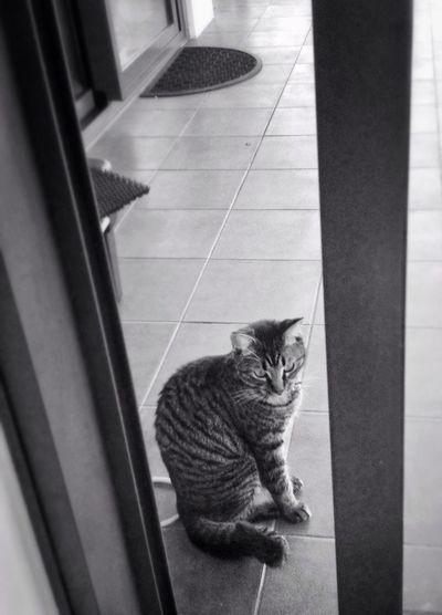 My lovely cat,