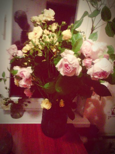 Rouse Emotion файно квіти ружа троянда Night Kherson Iokov Ukraine Beauty In Nature Flower Goodnight