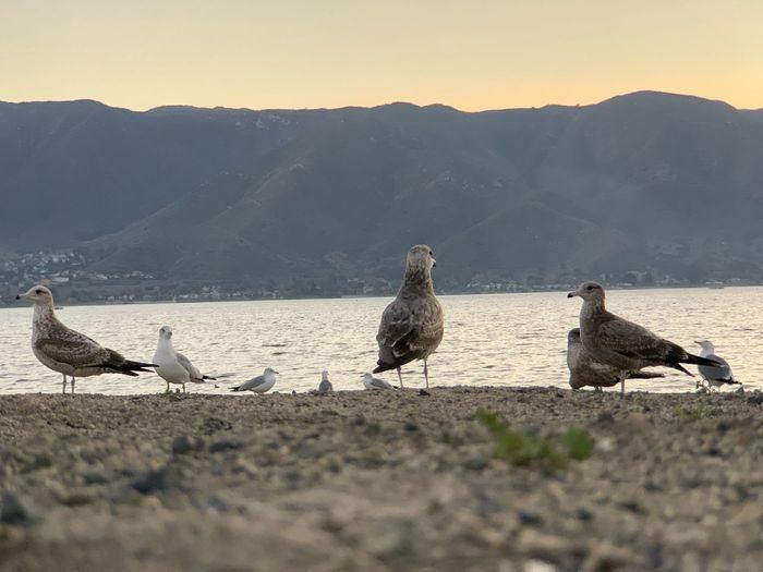 Seagulls perching on a land