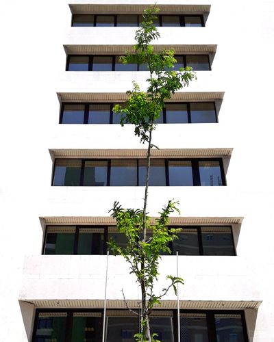 Low angle view of residential building