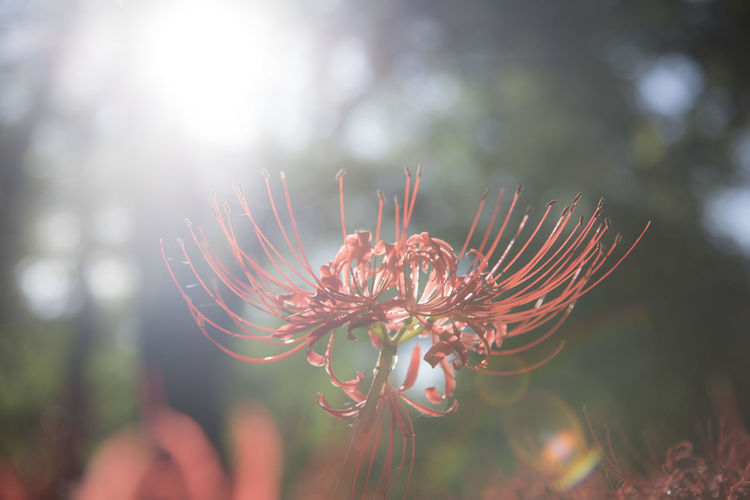 Close-up of flowers