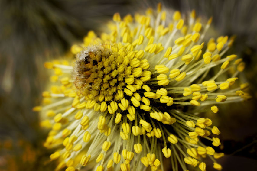 Beauty In Nature Blooming Close-up Day Flower Flower Head Fragility Freshness Growth Nature No People Outdoors Petal Plant Summer Yellow