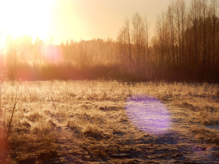 Cold Temperature Countryside Field Lens Flare Mystery Nature Outdoors Scenics Sunny Day Tranquil Scene Tranquility Tree Winter
