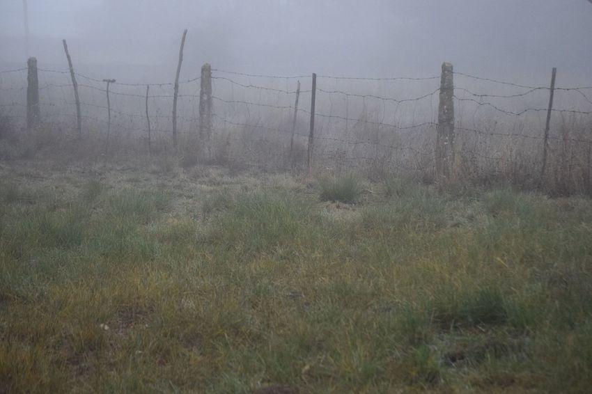 Barrier Fence Fog Land Grass Plant No People Landscape Tranquil Scene Nature