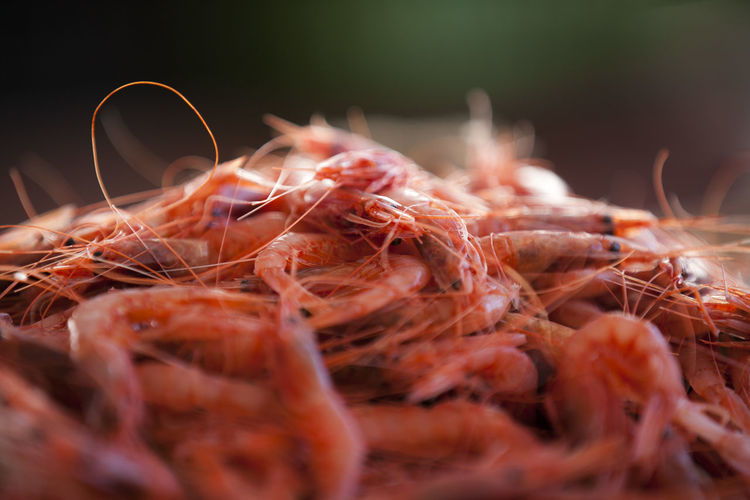Close-up of shrimps for sale