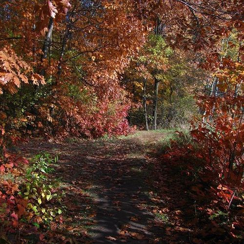 Tautou. Vscocam Vscogood Vzcopl Nofilter Autumn Woods Welesie Instarybnik Vzcopolskazlota Ofhcolors