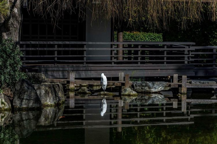 Reflection of a Crane Bird Animal Themes Animals In The Wild Animal Wildlife Built Structure No People Building Exterior Water Outdoors Day Nature Architecture Perching Stork Beauty In Nature California Love California Japanese  The Great Outdoors - 2017 EyeEm Awards