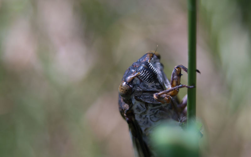 Close-up of cicada on plant