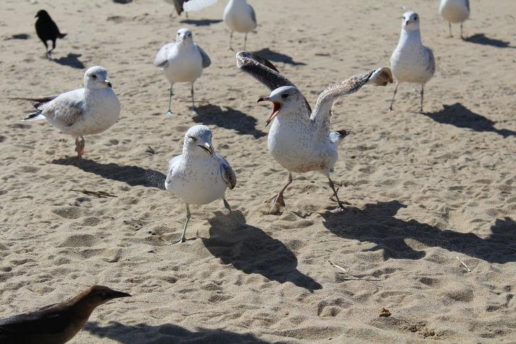 Flock of seagulls at beach