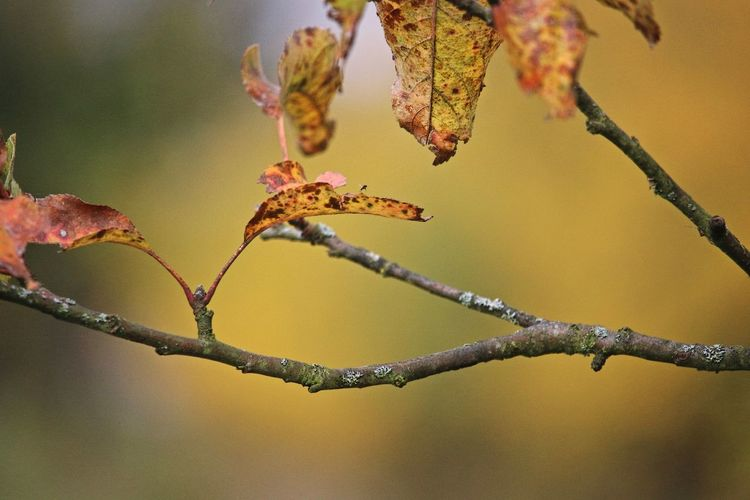 Autumn Plant Focus On Foreground Growth Beauty In Nature Close-up Tree Nature Branch Change Twig Vulnerability  Fragility Selective Focus Leaves Autumn Leaves Bokeh Nature_collection Nature Photography Naturelovers Beautiful Nature Leaf Tranquility