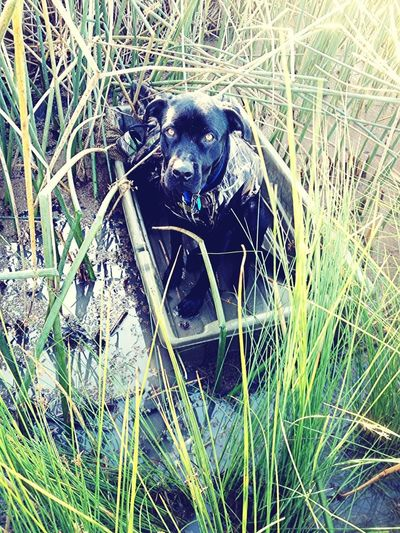 My baby boy on his first duck hunt. <3
