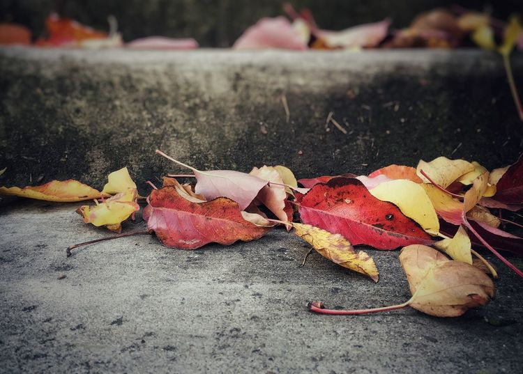 Showcase: February Autumn Colors Foliage