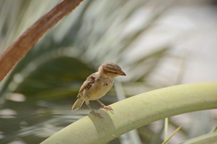 sad bird Animal