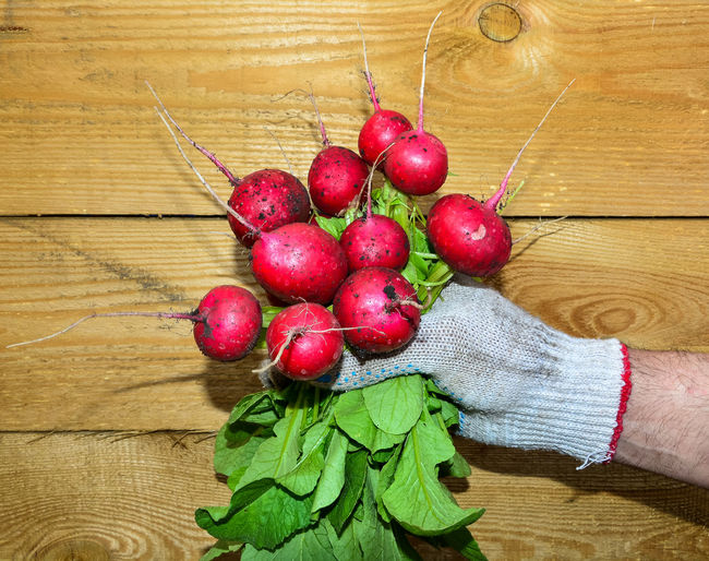 The hand holds a lot of red radish with greens Adult Close-up Diet Food Food And Drink Freshness Fruit Healthy Healthy Eating Healthy Lifestyle High Angle View Holding Human Body Part Human Hand Indoors  Natural Organic People Radish Red Ripe Root Salad Vegetable Wood - Material Investing In Quality Of Life Food Stories Business Stories Small Business Heroes