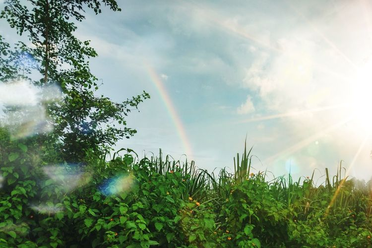 Distortion Morning Grass Atmosphere Vegetation Landscape Branch Daytime Field Nature Sunlight Cloud Tree Rainbow Sky Cloud - Sky Double Rainbow Petal Spectrum Streaming Single Flower Refraction Sunbeam Leaf Vein Fragility Pollen Shining Growing Plant Life