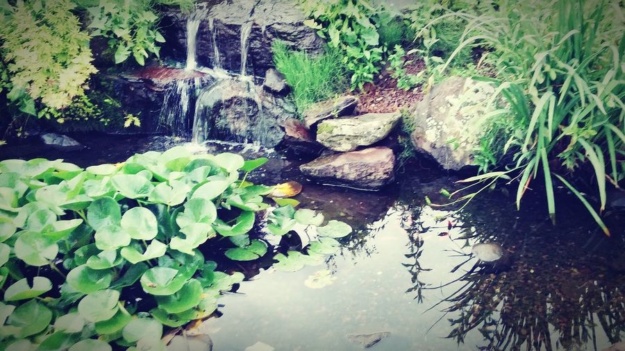 Waterfall Pond Nature