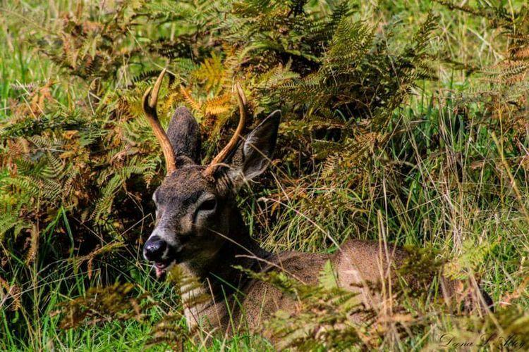 Northwest Trek Wildlife Deer